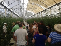 Karisma's Green Globe Certified 100K sq-foot Greenhouse located at El Dorado Royale Resort.