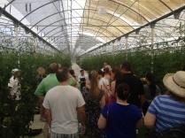 Karisma's Green Globe Certified 100K sq-foot Greenhouse located at El Dorado Royale Resort.