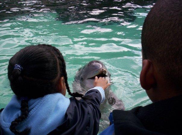 SeaWorld Dolphin 2005